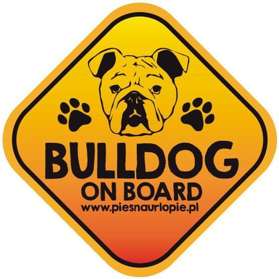 Naklejka na samochód z psem rasowym (buldog angielski) idealna dla właściciela, który lubi podróżować z psem i dba o jego bezpieczeństwo. Na prezent dla miłośnika zwierząt czy jako gadżet dla wielbiciela psów.