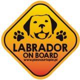 Naklejka na samochód z psem rasowym (labrador retriever) idealna dla właściciela, który lubi podróżować z psem i dba o jego bezpieczeństwo. Na prezent dla miłośnika zwierząt czy jako gadżet dla wielbiciela psów.