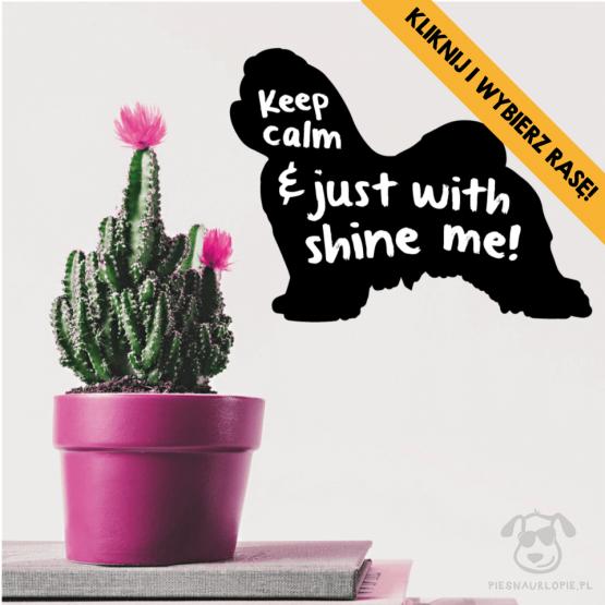 """Naklejka na ścianę """"Keep calm and just shine with me"""" idealna dla właścicieli psów rasy maltańczyk. Na prezent dla miłośnika zwierząt czy jako gadżet dla wielbiciela psów."""