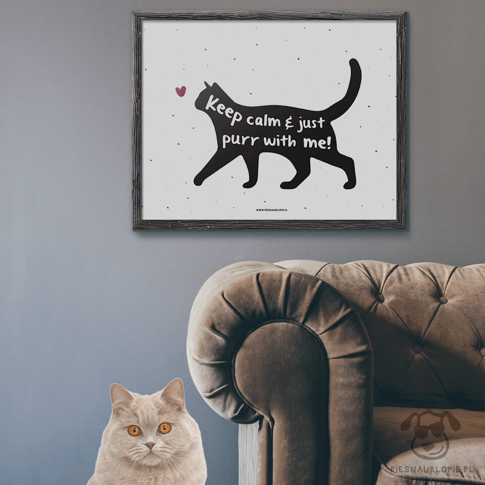Plakat Z Kotem Keep Calm And Just Purr With Me
