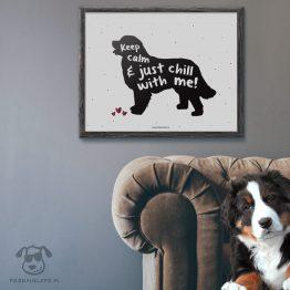 """Plakat """"Keep calm and just chill with me"""" idealny dla właścicieli psów rasy berneński pies pasterski lub nowofundland. Na prezent dla miłośnika zwierząt czy jako gadżet dla wielbiciela psów."""