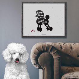 """Plakat """"Keep calm and just shine with me"""" idealny dla właścicieli psów rasy pudel. Na prezent dla miłośnika zwierząt czy jako gadżet dla wielbiciela psów."""