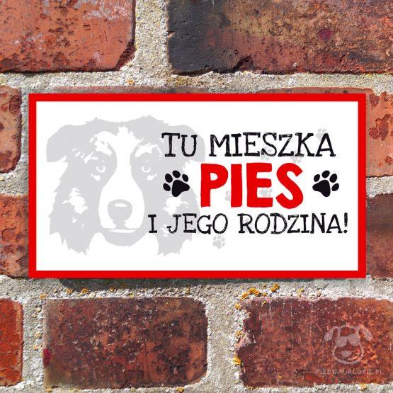 Tabliczka ostrzegawcza z psem rasowym owczarek australijski (aussie). Prezent dla właściciela psa. Sklep z wyjątkowymi gadżetami dla miłośników zwierząt.